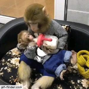 شیر خوردن بچه میمون بامزه !