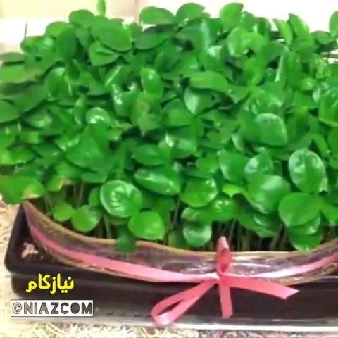 طرز درست کردن سبزه پرتقالی برای عید نوروز با دانه های پرتقال