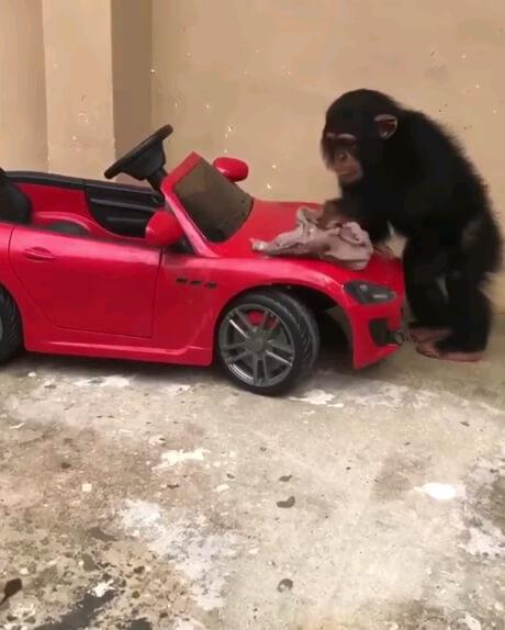 حرکت جالب بچه میمون بامزه
