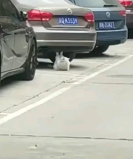 دراز و نشست زدن گربه | گیف باحال