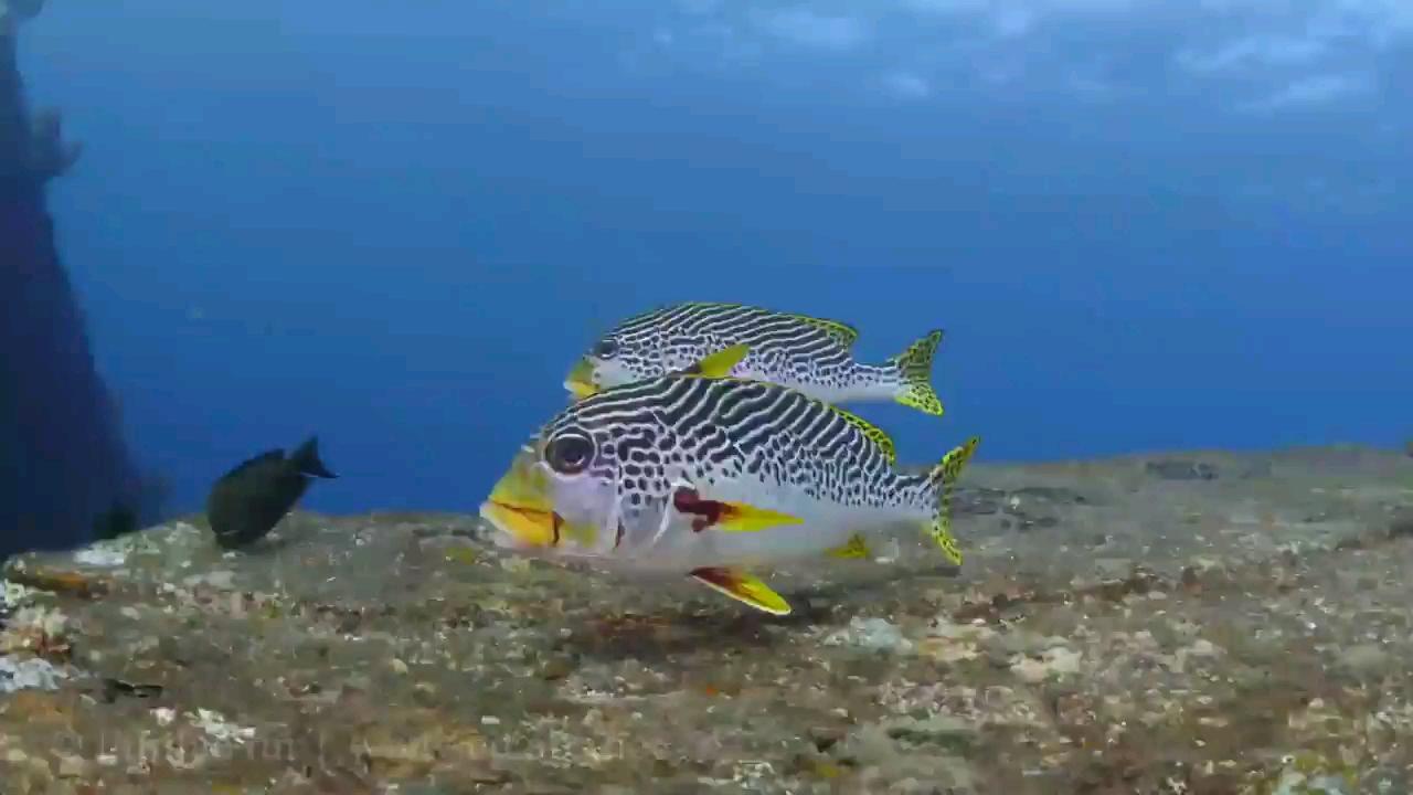 ویدیو سفری جذاب به دنیای زیر آب | گشتی در میان صخره های مرجانی