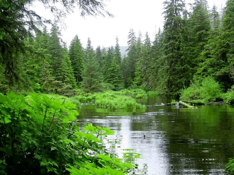 تصویر متحرک جنگل زیبا