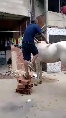 یک کلیپ کوتاه خنده دار از تفاوت سوار شدن بچه و یک مرد روی اسب
