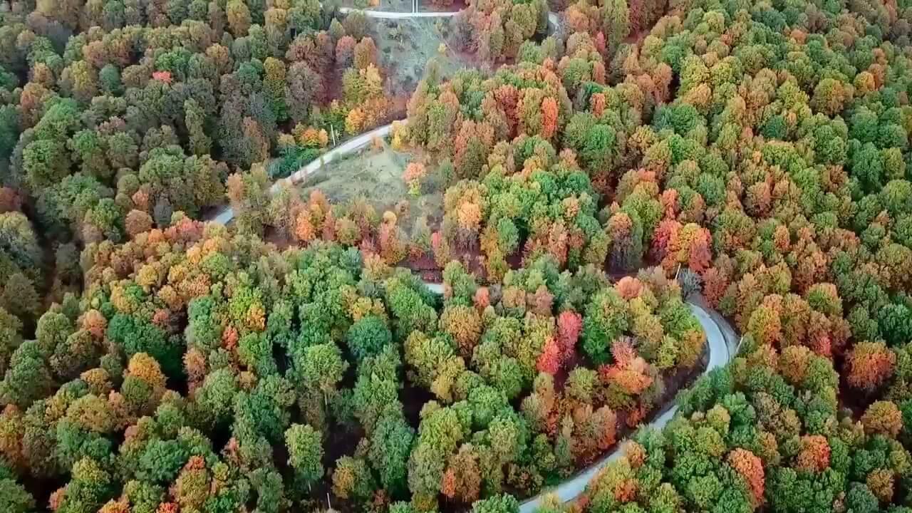 فیلم پاییز رویایی جنگل های هیرکانی