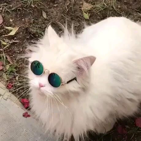 اینم یه گربه باکلاس و خوشتیپ !