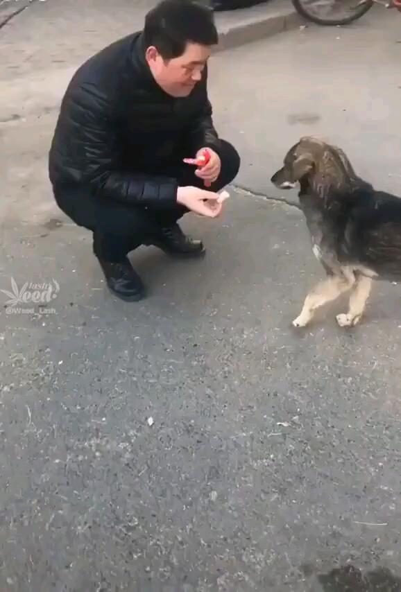 تشکر کردن رو از این سگ یاد بگیریم !