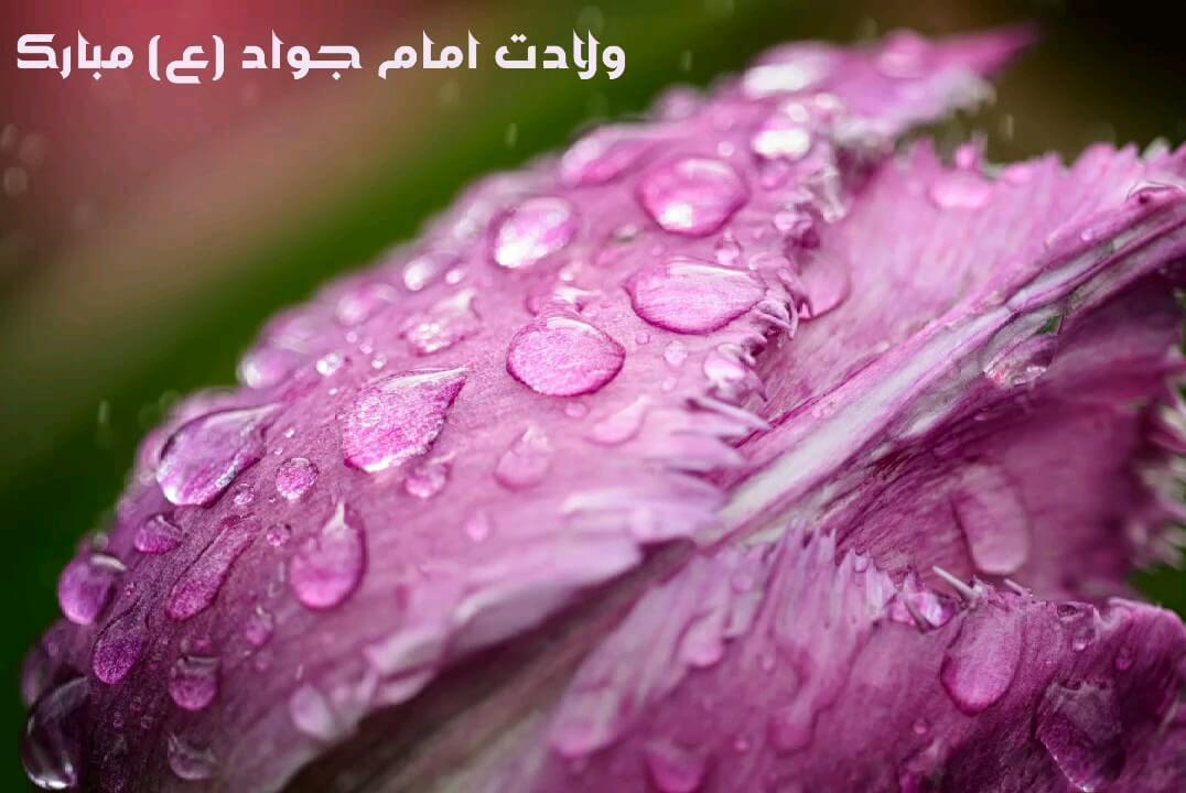 عکس متحرک ولادت امام جواد (ع) مبارک باد