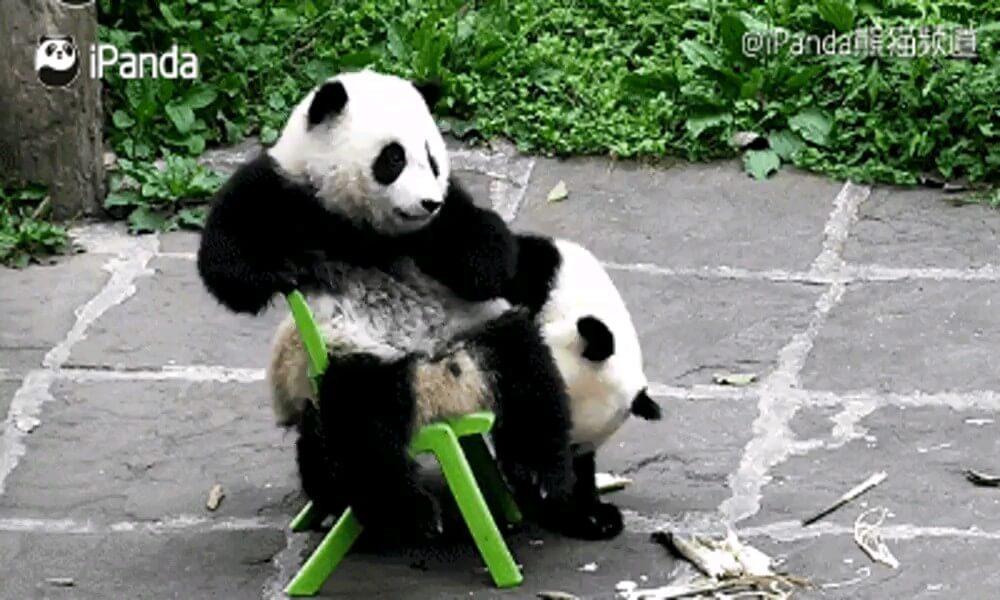 تصاویر خنده دار از مادر و بچه پاندا