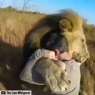 ویدیویی عاشقانه از صحنه های بغل کردن حیوانات و صاحبانشان