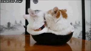 بوس کردن گربه