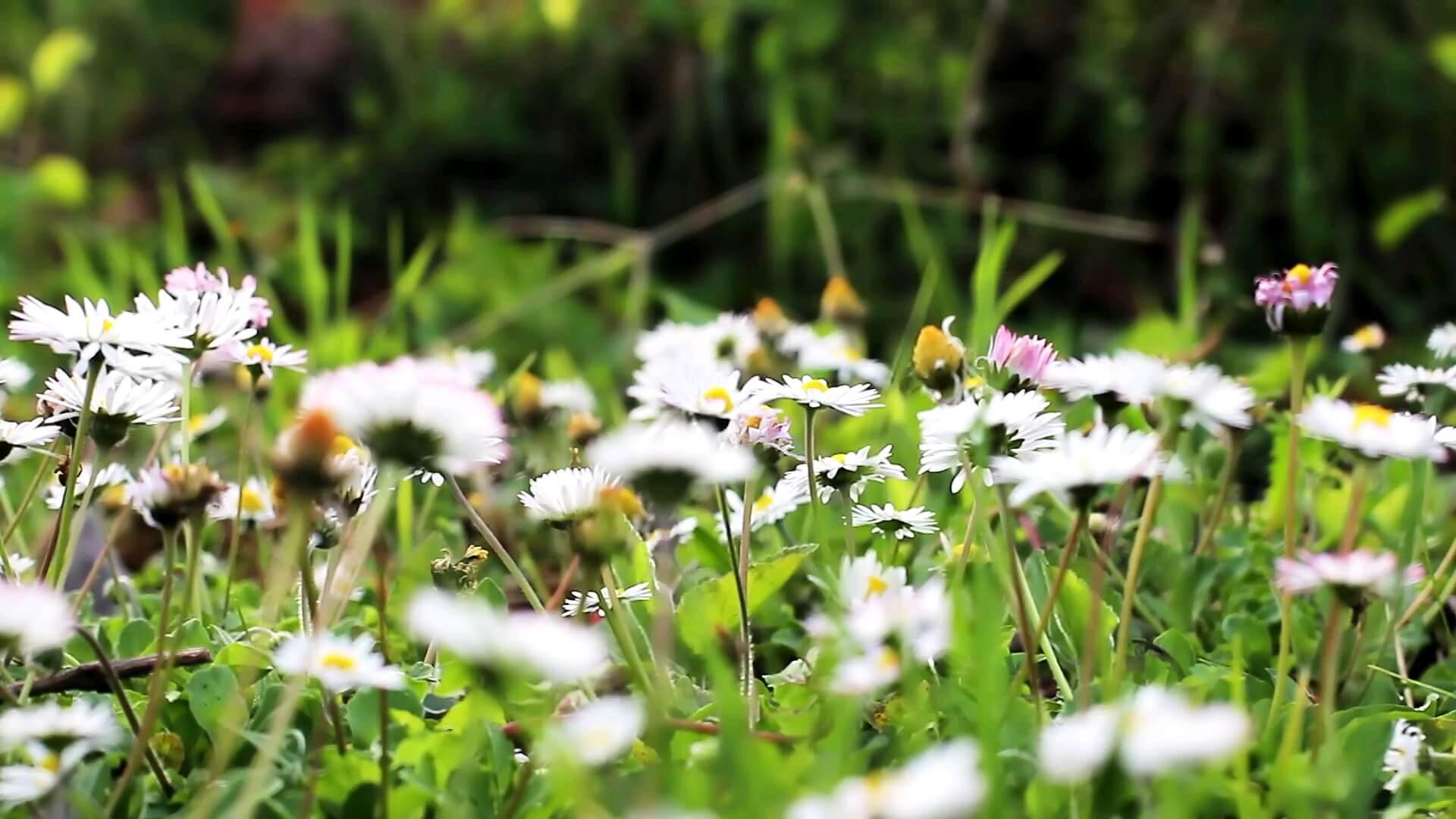 شکوفه ای بهاری