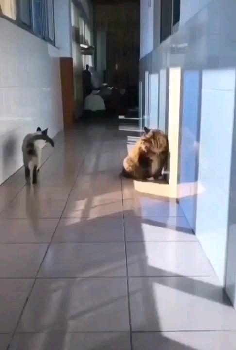 حرکت خنده دار گربه :))