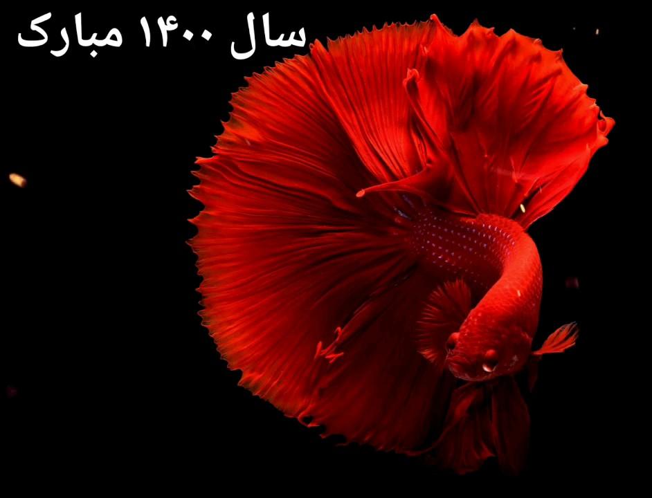 دانلود GIF سال ۱۳۹۸ مبارک