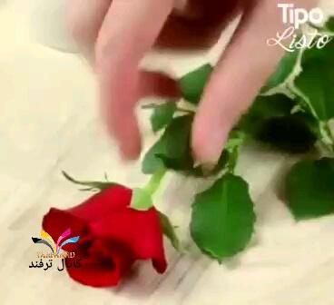 آموزش تکثیر کردن گل به روشی ساده در منزل