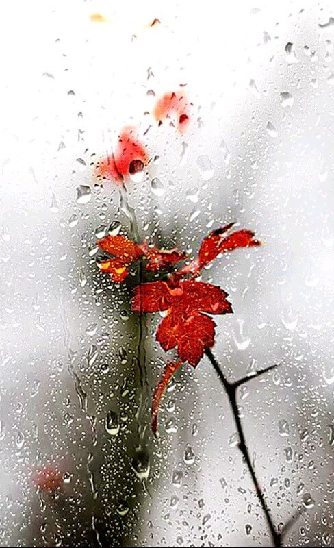 فیلم آموزش درست کردن گل رز زیبا با روبان