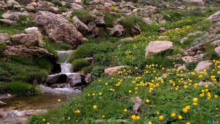 گشتی در طبیعت زیبای رامسر
