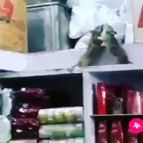 دعوای خنده دار و باحال دو تا موش سر خوراکی ها :))