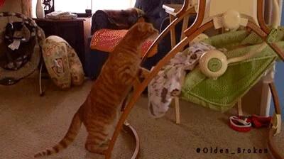 تکان دادن گهواره نوزاد توسط گربه ! خیلی باحاله