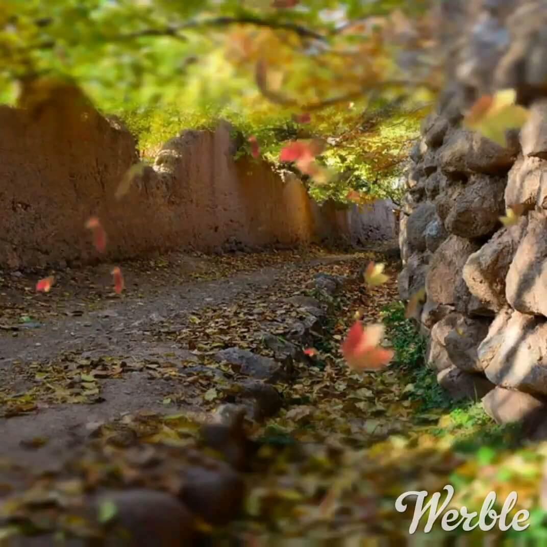 عکس متحرک کوچه باغ پاییزی زیبا - شهرستان محلات