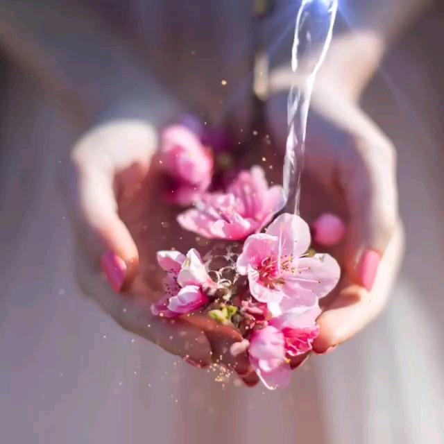 دانلود عکس متحرک زیبا و رمانتیک | تقدیم گل رمانتیک