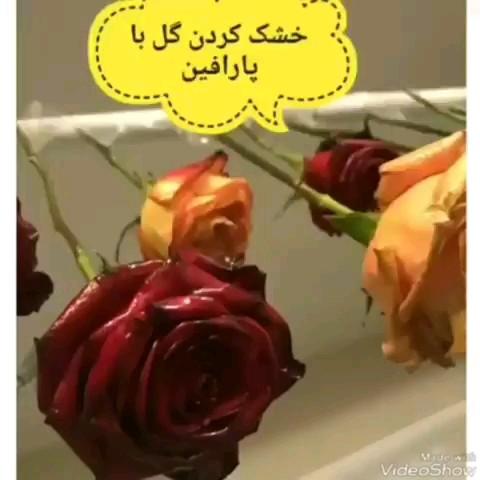 چگونه گل را خشک کنیم ؟ | کلیپ آموزشی