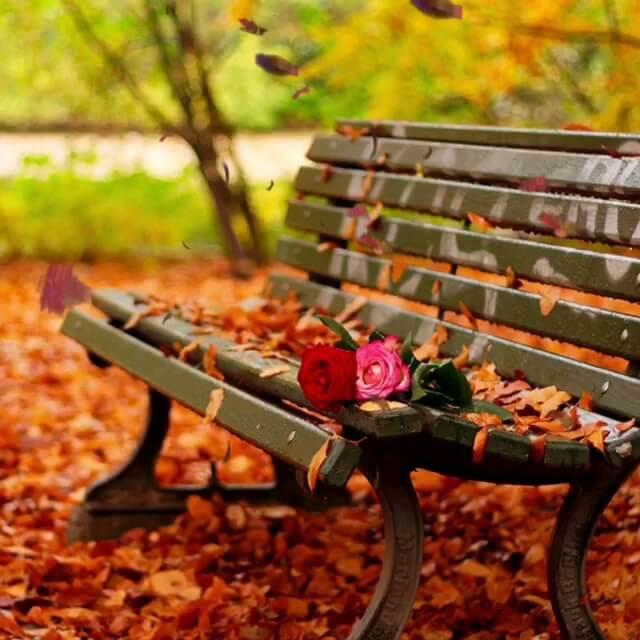 پاییز زیبا