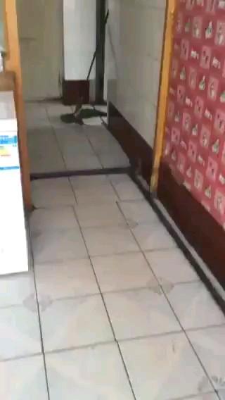 ترس گربه از موش | واقعا دیدنیه