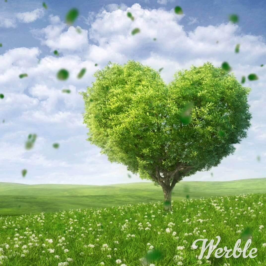 تصویر متحرک عاشقانه و رمانتیک