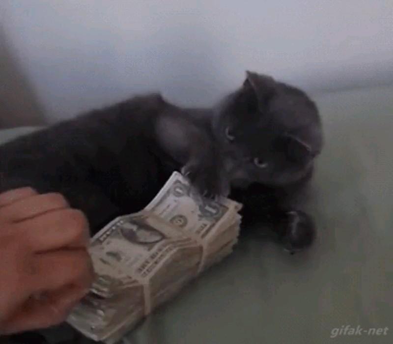 گربه ای که عاشق دلاره