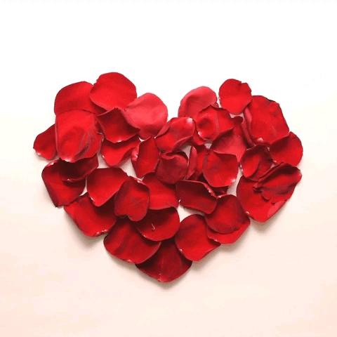 تصویر متحرک گل رز عاشقانه