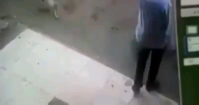 حمله عجیب و خنده دار گربه به عابر | احتمالا قضیه ناموسیه :))