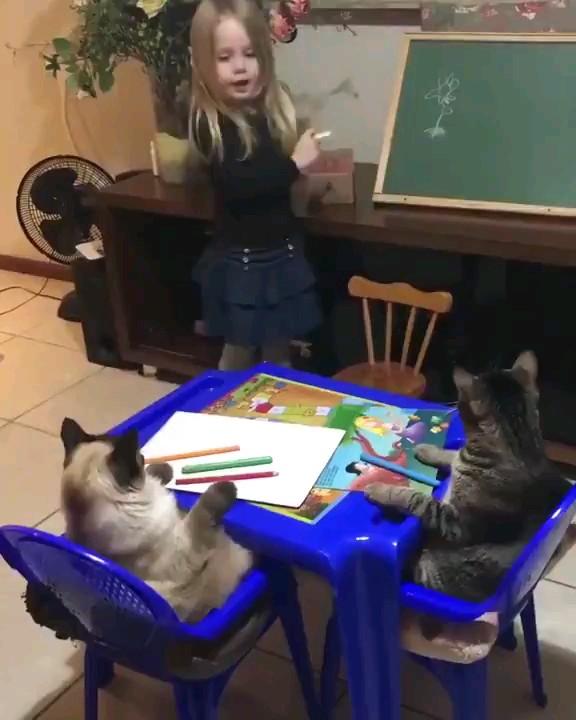 کلیپ خنده دار یوتویوب | درس دادن به گربه ها