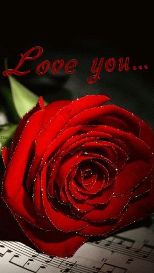 عکس متحرک گل رز قرمز