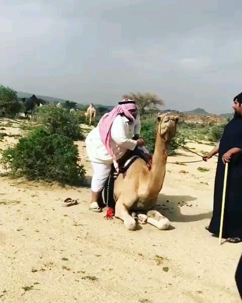 کلیپ خنده دار جدید از سوارشدن مرد عرب روی شتر :))))