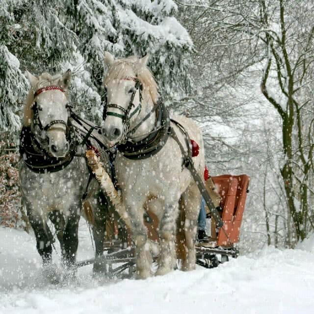 گیف متحرک اسب ها و جنگل برفی
