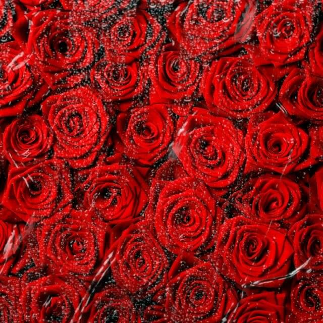 عکس متحرک گل رز قرمز عاشقانه