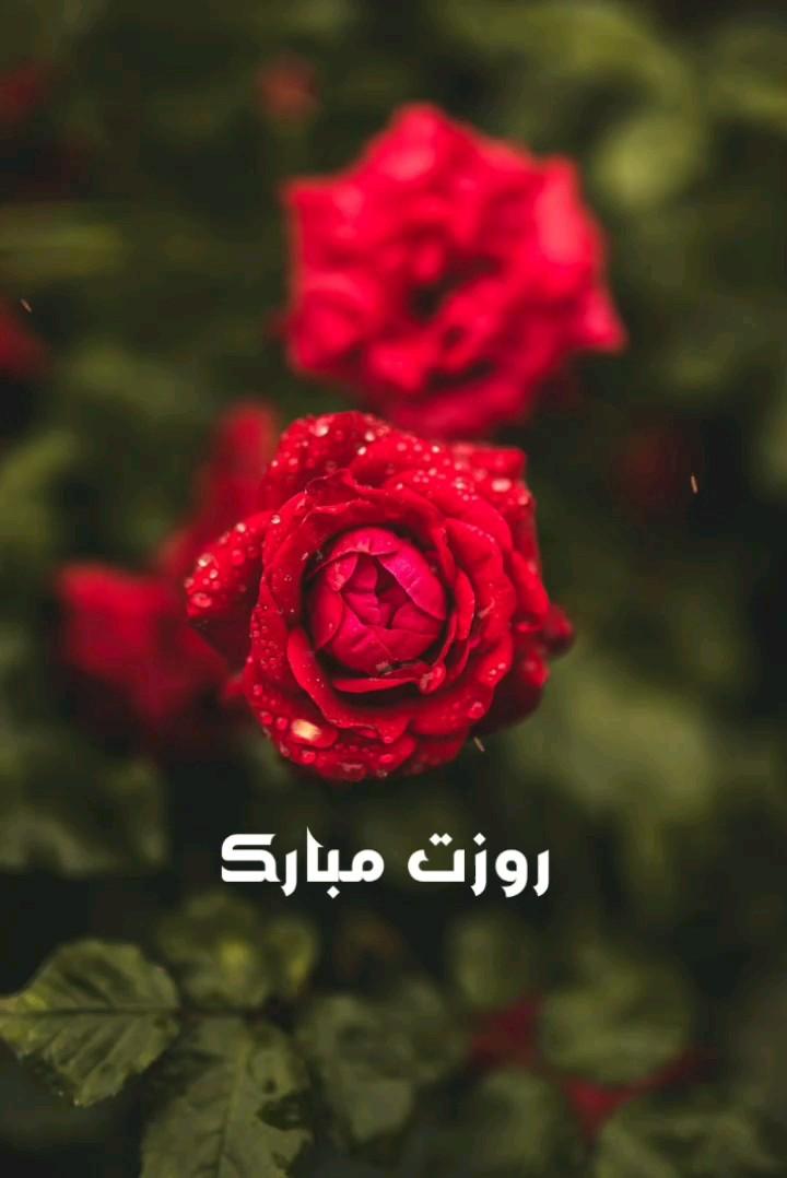 عکس متحرک روزت مبارک