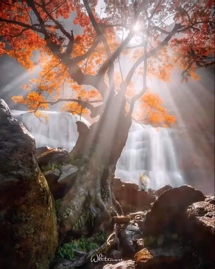 عکس متحرک پاییز