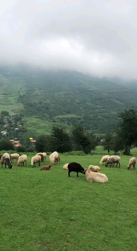 روستای زیبای سنگچال مازندران
