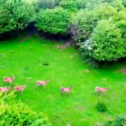 کلیپ تورگردی | جنگل فندقلو ، نمین ، اردبیل