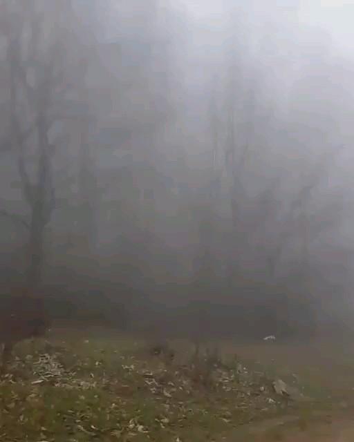 فیلم جنگل ابر شاهرود سمنان یکی از معروف ترین و زیباترین جاذبه های طبیعی ایران