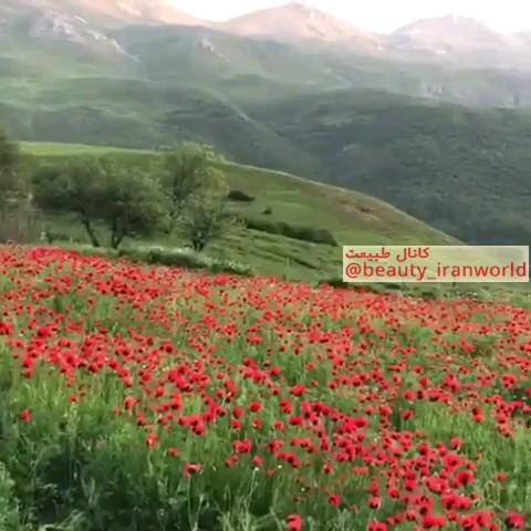 مازندران نوشهر کجور روستای زیبای نیچکوه دشت شقایق منطقه گوسره