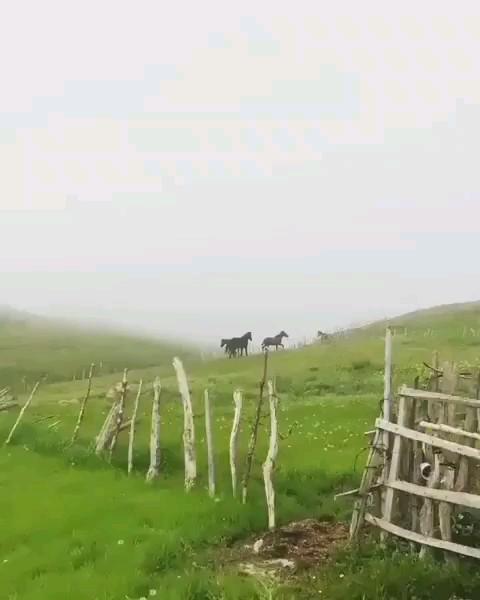 فیلمی کوتاه از ارتفاعات تالش در گیلان