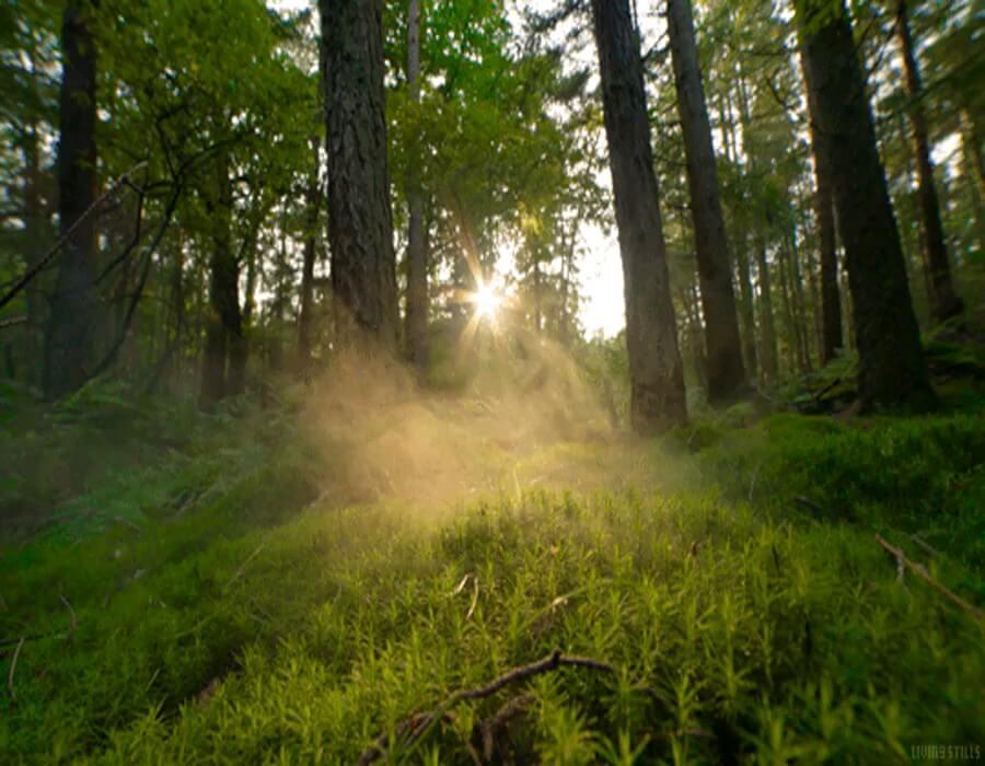 صبح دلنشین جنگل