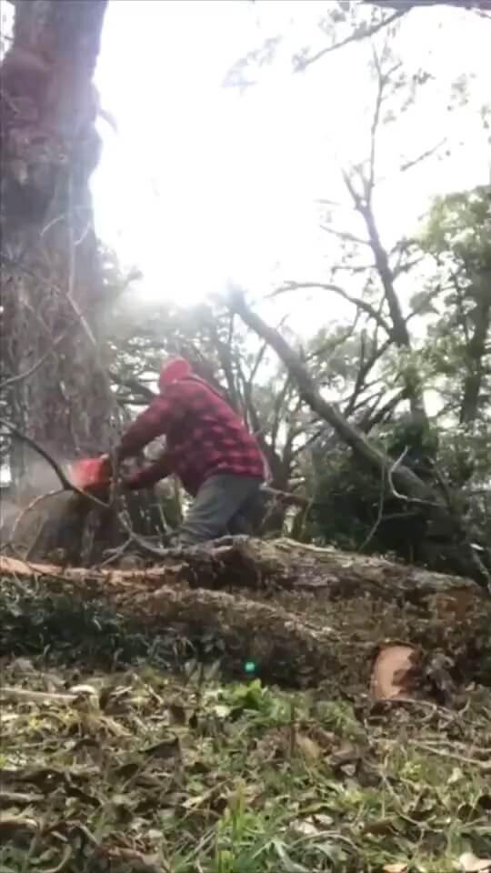 کلیپ خنده دار بریدن درخت