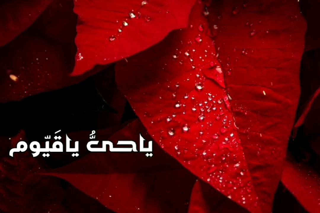 کارت پستال موزیکال ذکر روز چهارشنبه | یاحی و یاقیوم