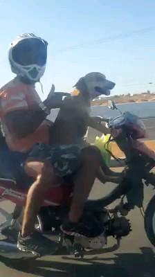 رانندگی کردن سگ با موتور :)))