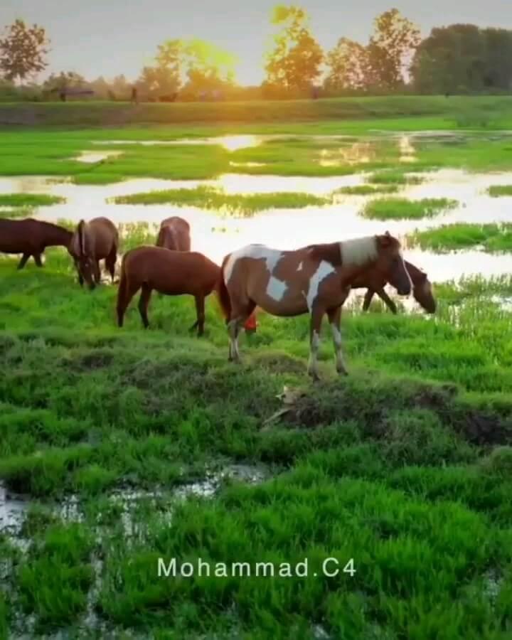 طبیعت روستای هندخاله ، روستای صومعه سرا ، گیلان