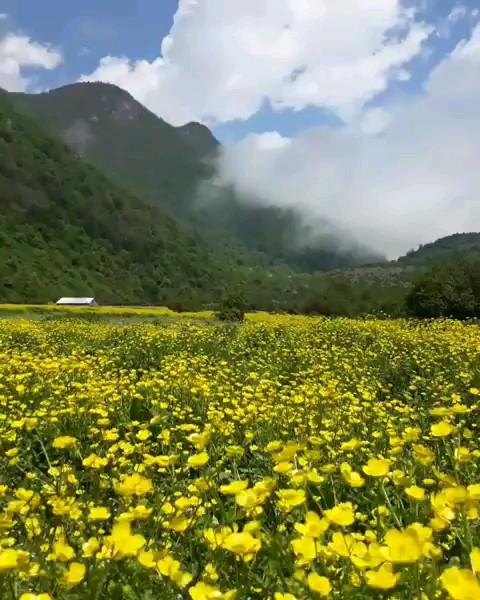 طبیعت زیبا دریاسر گیلان