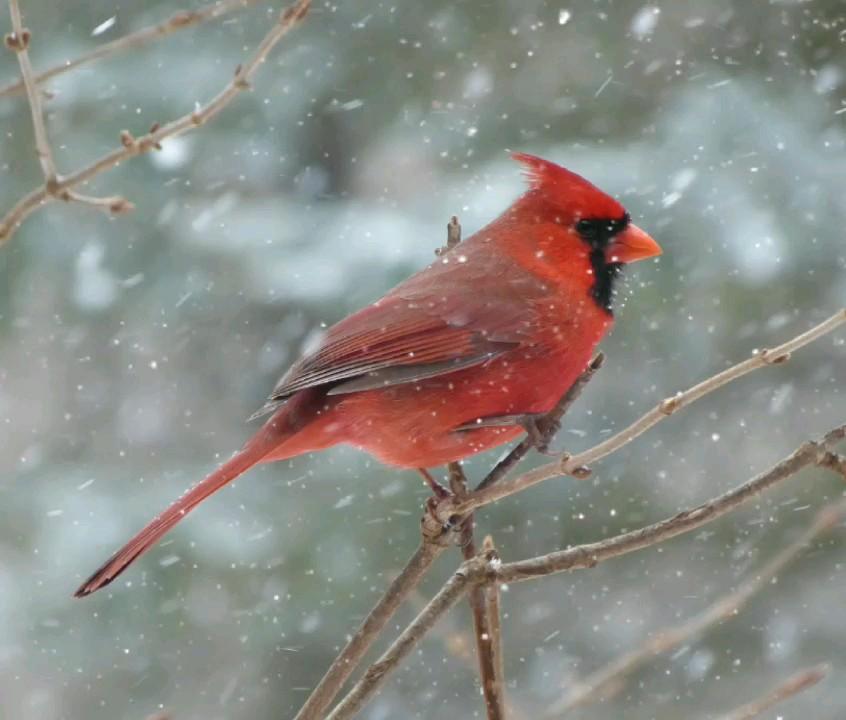 گیف بارش برف | پرنده | snow